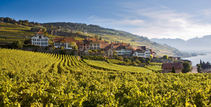 Vineyards tours in Lavaux